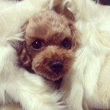 [INSTAGRAM] 141124 Minzy shares a super cute photo ofDougie
